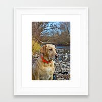 lab Framed Art Prints featuring Lab by Todd Allman