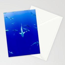 Sharks! Stationery Cards