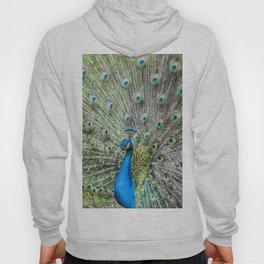 The peacock portrait Hoody