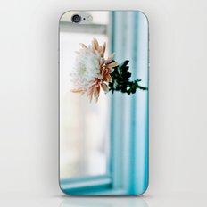 White and Pink Chrysanthemum iPhone & iPod Skin