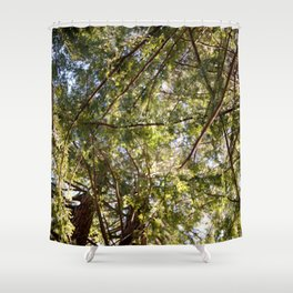 Redwood Ceiling  Shower Curtain