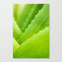 succulent Canvas Prints featuring Succulent by Andrea Gingerich