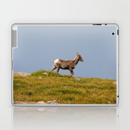 Bighorn Sheep Laptop & iPad Skin