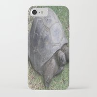 tortoise iPhone & iPod Cases featuring tortoise by shannon's art space