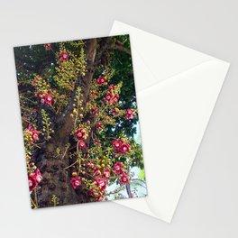 Monkey's Apricot Stationery Cards
