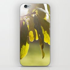 leaves at sunset iPhone Skin