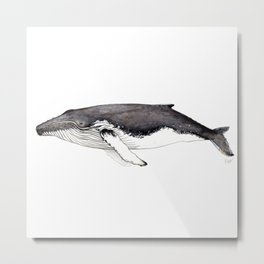 North Atlantic Humpback whale Metal Print