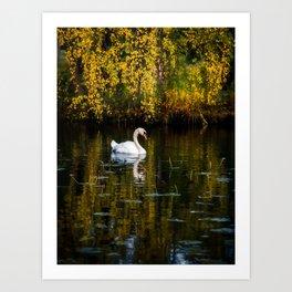 Swan in Autumn Lake Art Print