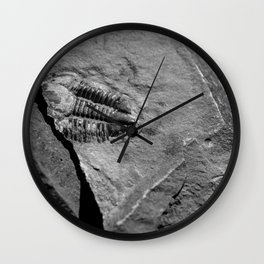 Utah - Trilobite Fossil Crack Wall Clock