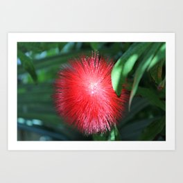 Flower No 1 Art Print