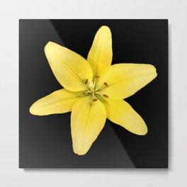 Yellow Lily Flower 999 Metal Print