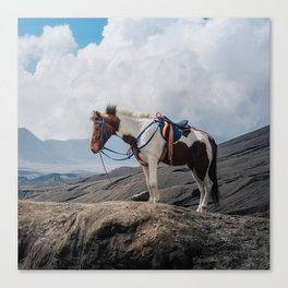 The Horse and the Volcano Canvas Print