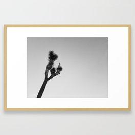Lone Joshua Tree Framed Art Print
