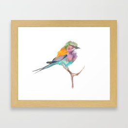 Beautiful Colorful Bird Framed Art Print