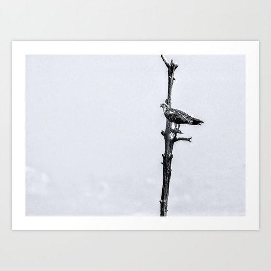 Lonely Perch Art Print
