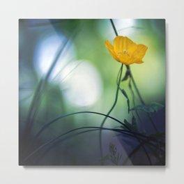 Yellow Poppy. Metal Print