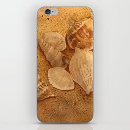 Shells in the Sand iPhone Skin