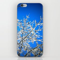 White Branches, Blue Sky iPhone & iPod Skin