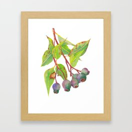Gum tree branch with gumnuts - Watercolour Framed Art Print