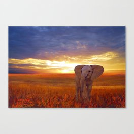 Elephant baby Canvas Print