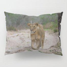 Female Lion at Tembe Elephant Park Pillow Sham