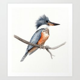 Kingfisher Bird Watercolor Illustration Art Print