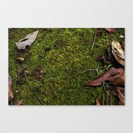 Mossy Plot Canvas Print