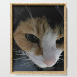 Calico cat Serving Tray
