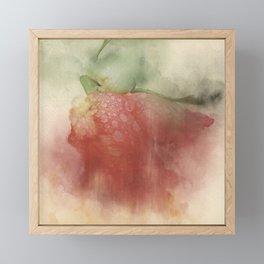 Trampled Rose Color Framed Mini Art Print