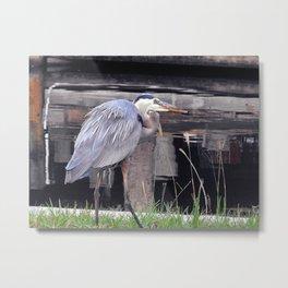 Great Blue Heron Waiting Metal Print