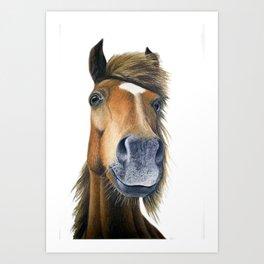Chestnut Pony Art Print