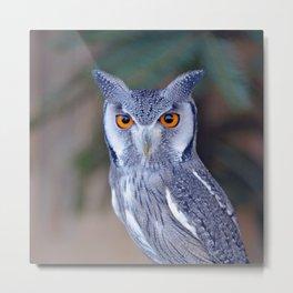 Owl_20180201_by_JAMFoto Metal Print
