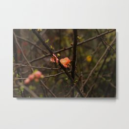 Little orange flowers Metal Print