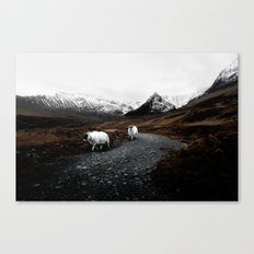 SHEEP - MOUNTAINS - SNOW - ROAD - PHOTOGRAPHY - FUNNY Canvas Print