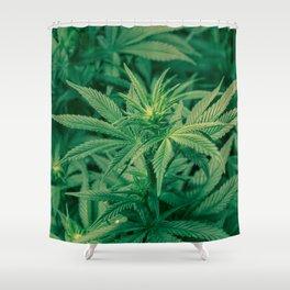 Marijuana Plants  Shower Curtain