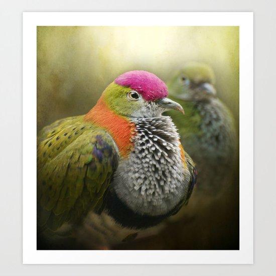 Superb Fruit Dove Art Print