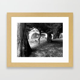 Scout by Jessi Fikan Framed Art Print