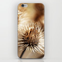 Barnacles iPhone Skin