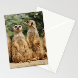 Meerkat_2015_0122 Stationery Cards