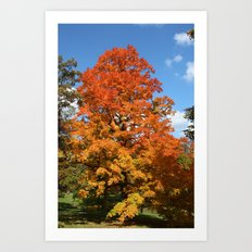 Red, Orange, Yellow Tree Color Photography Art Print