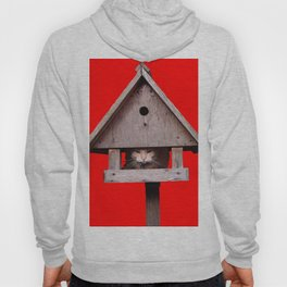 Cat hides in a birdhouse - red Hoody