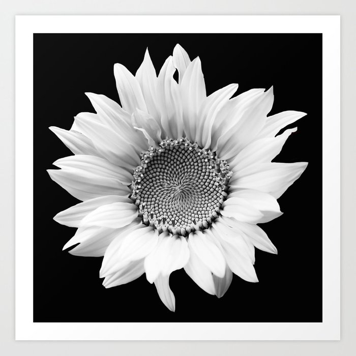 Sunflower in black and white decor society6 buyart art print