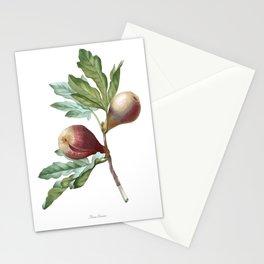 HIGHEST QUALITY botanical poster of Fig Stationery Cards