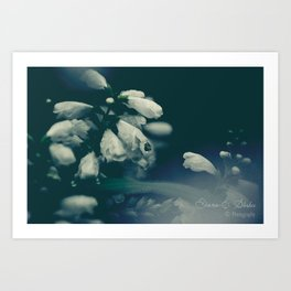 Curses of the forest Art Print