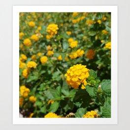 Yellow Chrysanthemum in Focus Art Print