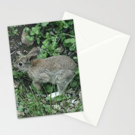 Wild Bunny Rabbit Stationery Cards