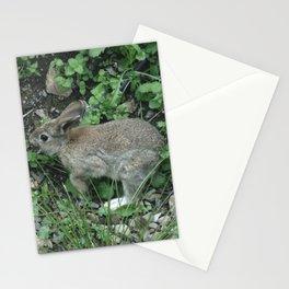 Wild Bunny Rabbit Stationery Cards