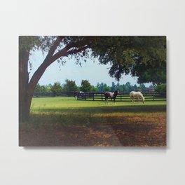 Ocala Horse Ranch Beauties Metal Print
