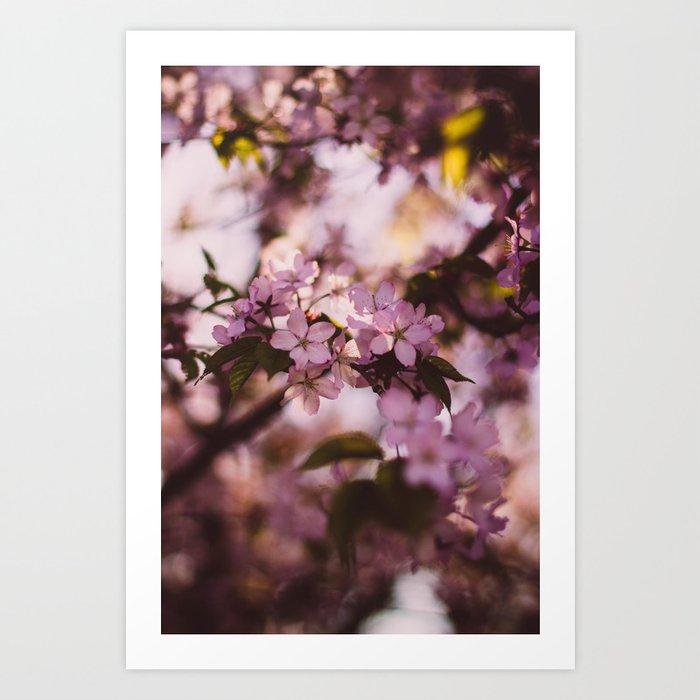 Beauty of Spring III Art Print