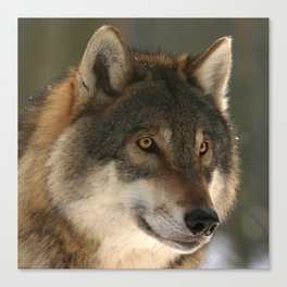 Lone Wolf Canvas Print